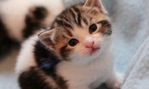 Battersea kitten